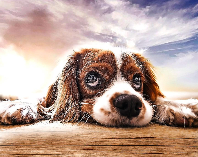 dog-5283425_1280